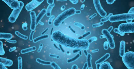 Listeria testen - eenvoudige detectie op Listeria spp. en L. monocytogenes