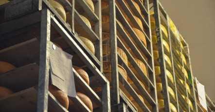 Kaasboerderij Kaamps: Zekerheid over temperatuur stelt productieproces veilig
